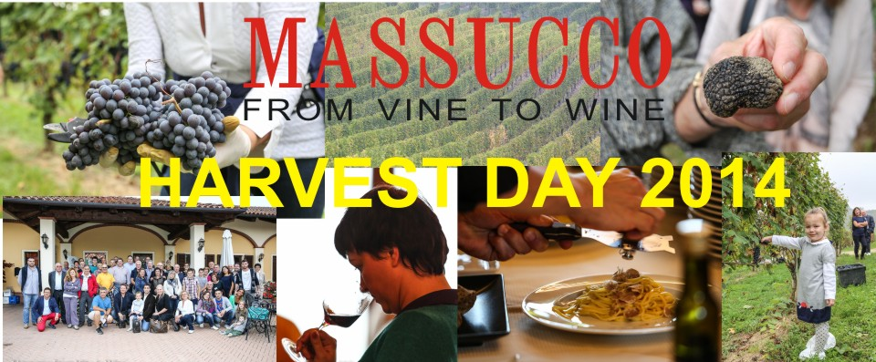 MASSUCCO HARVEST DAY 2014