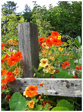 flowers on a wooden fence line