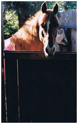 Linda's mare, Foxy, at home