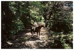 Horseback in a shady grove