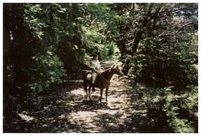 Horseback in a shady grove